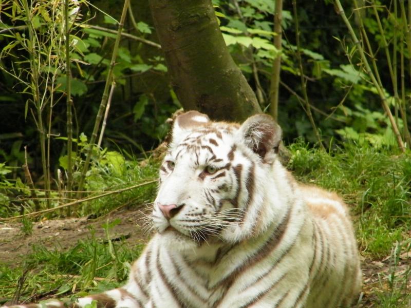 zoo de beauval Dscf0614