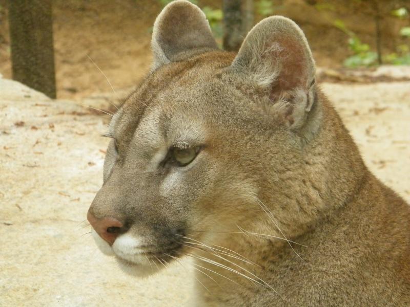 zoo de beauval Dscf0615
