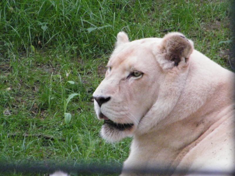 zoo de beauval Dscf0616