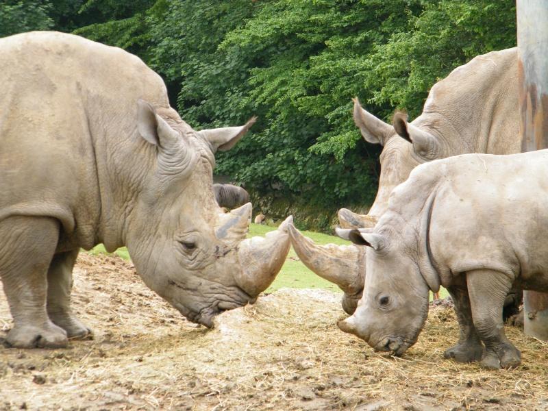 zoo de beauval Dscf0617