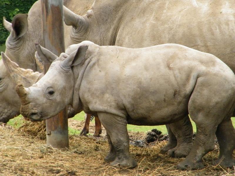 zoo de beauval Dscf0618