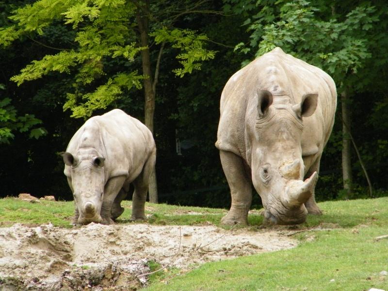 zoo de beauval Dscf0619