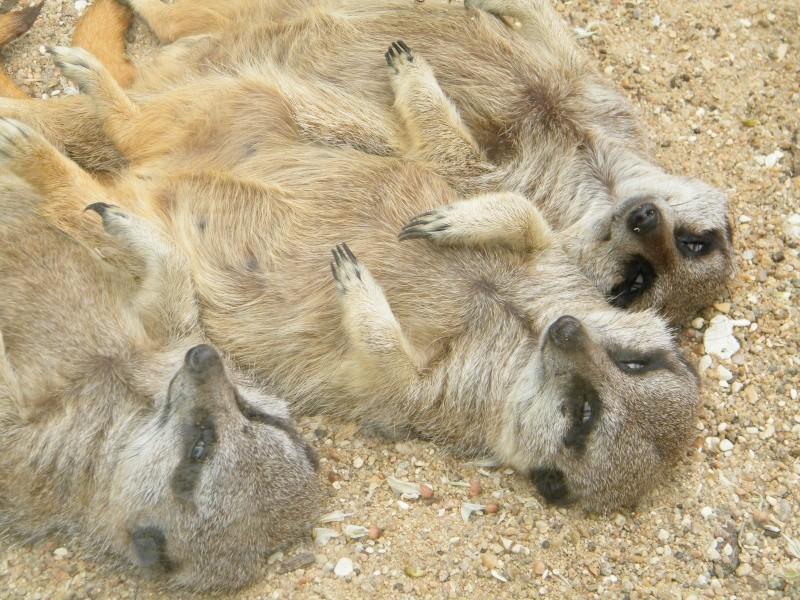zoo de beauval Dscf0620