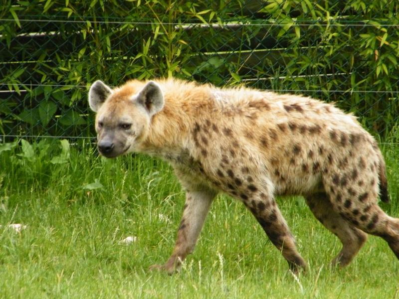 zoo de beauval Dscf0622