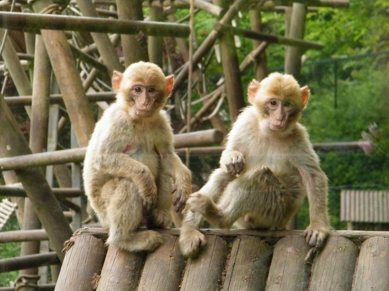 zoo de beauval Dscf0623