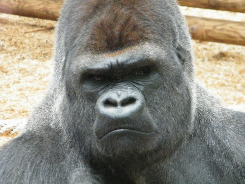 zoo de beauval Dscf0624