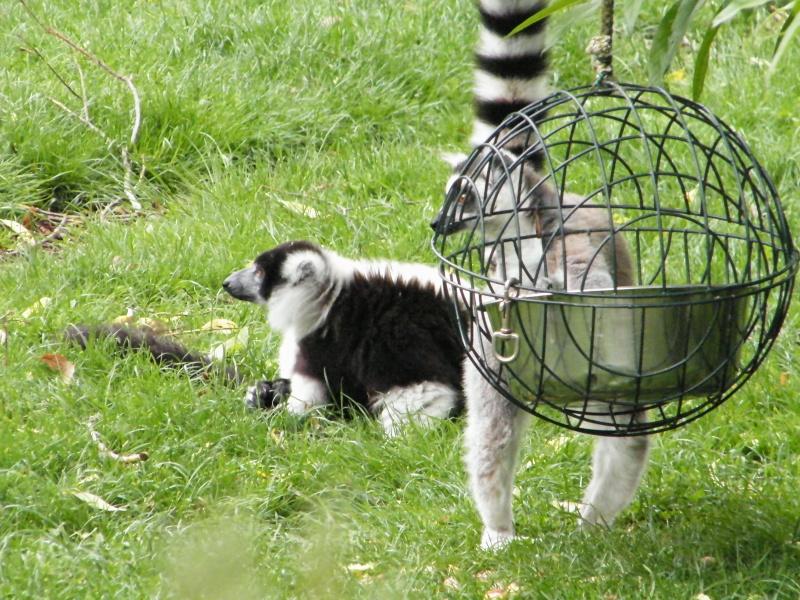 zoo de beauval - Page 2 Dscf0626