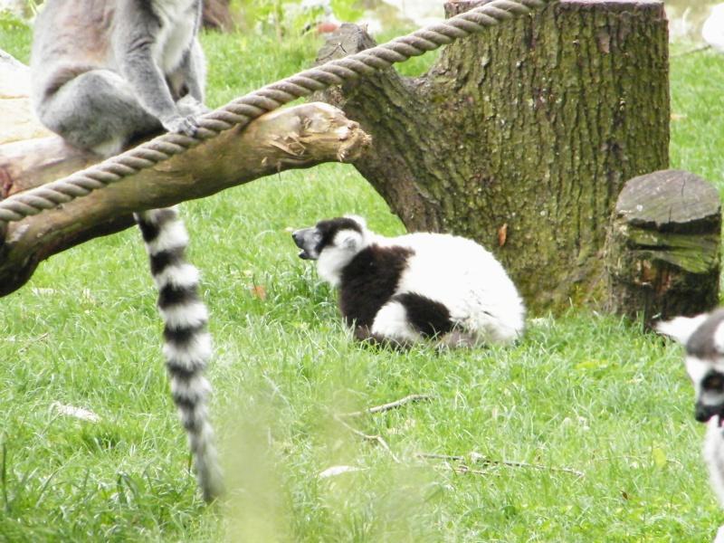 zoo de beauval - Page 2 Dscf0627
