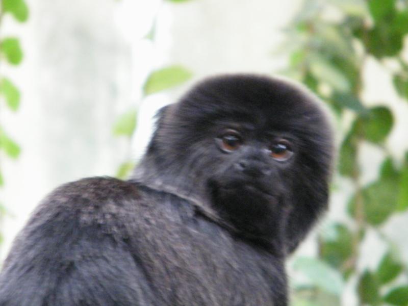 zoo de beauval Dscf0710