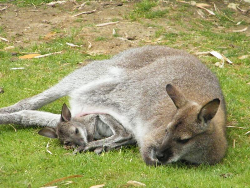 zoo de beauval Dscf0711