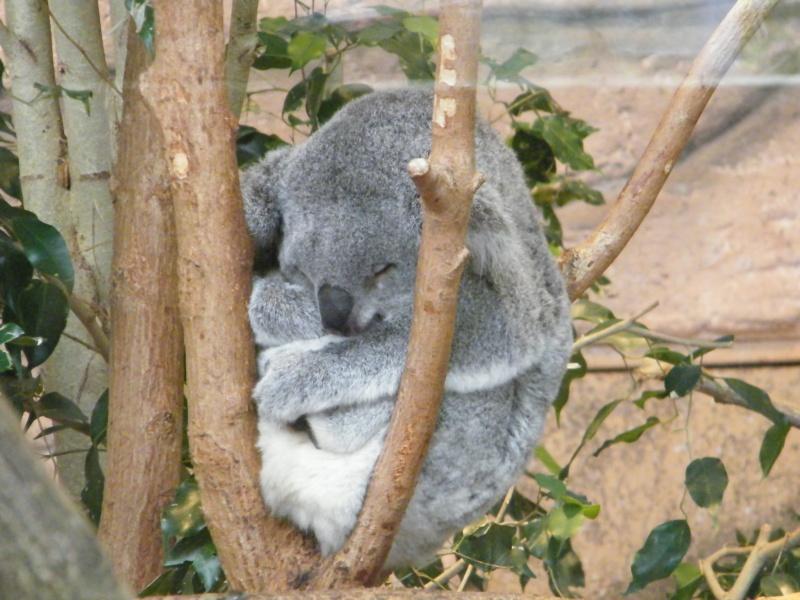 zoo de beauval Dscf0712