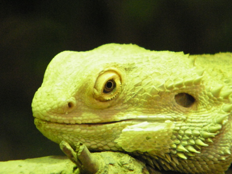 zoo de beauval Dscf0715