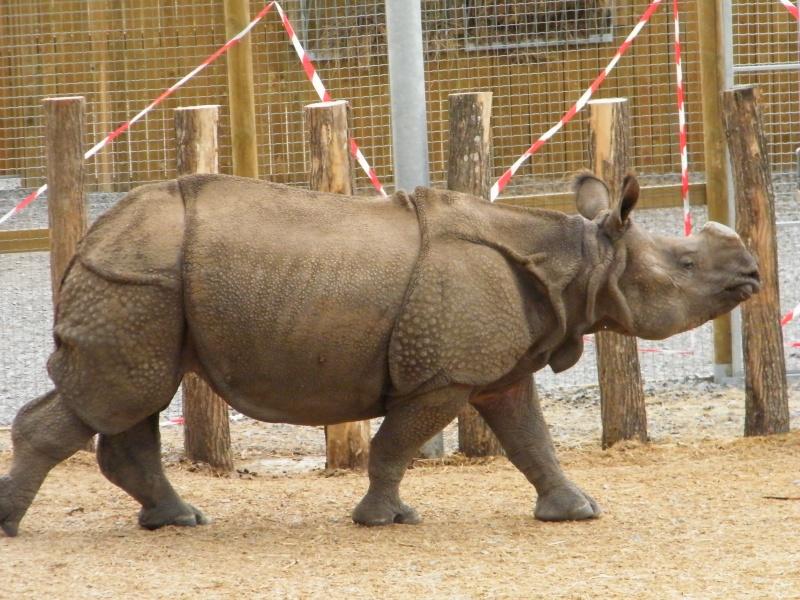 zoo de beauval Dscf0716