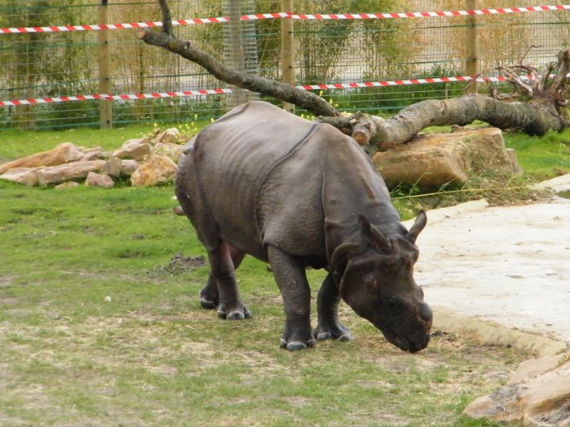 zoo de beauval Dscf0717