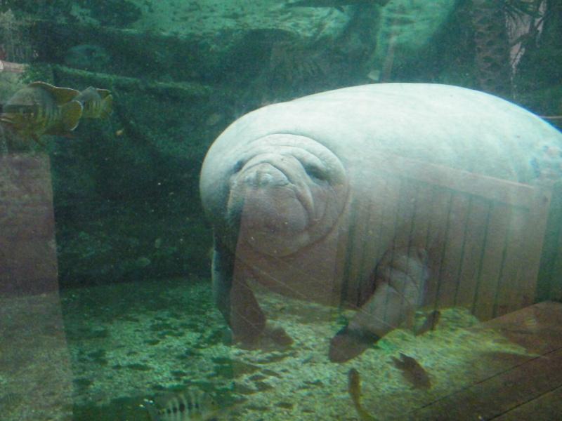 zoo de beauval Dscf0719