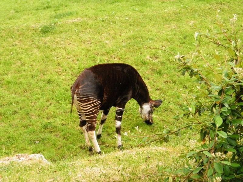 zoo de beauval Dscf0721