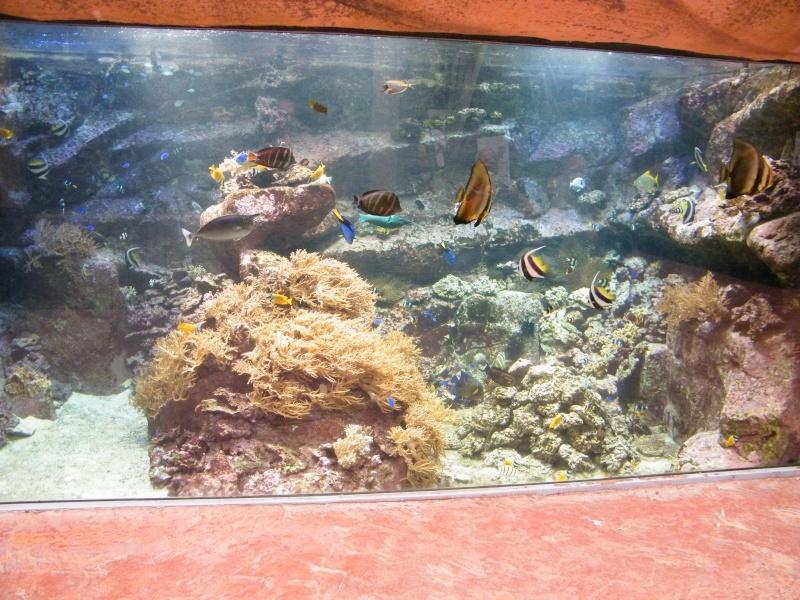 zoo de beauval - Page 2 Dscf0735