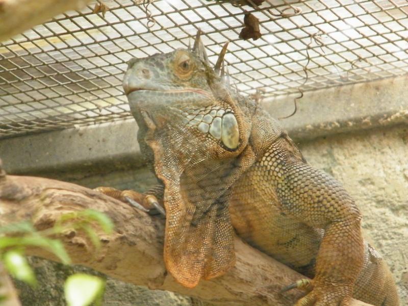 zoo de beauval - Page 2 Dscf0755