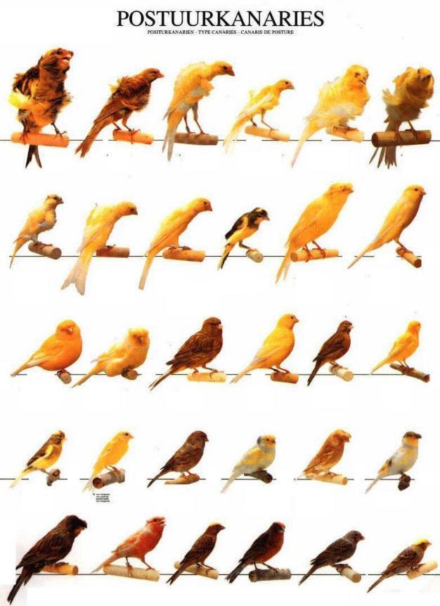 Les différentes races de posture Postuu10