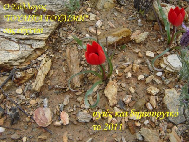 Καλώς ήλθε το 2011! Iii_1610