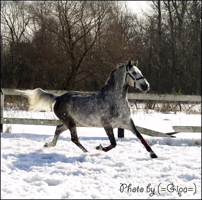 White Snow du Paradis 0c20f010