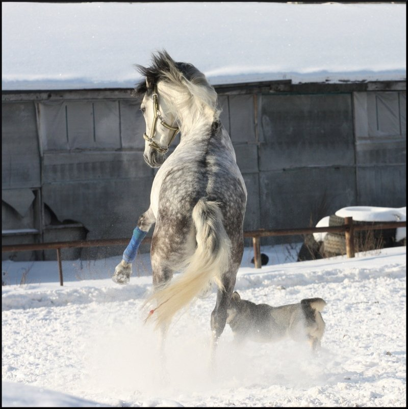White Snow du Paradis 61ff7310
