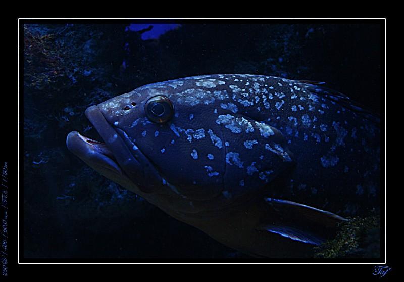 Aquarium de Monaco, le retour... Fav_2022