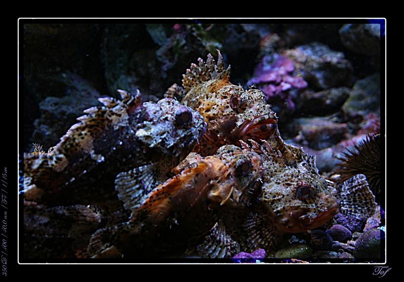 Aquarium de Monaco, le retour... Fav_2023