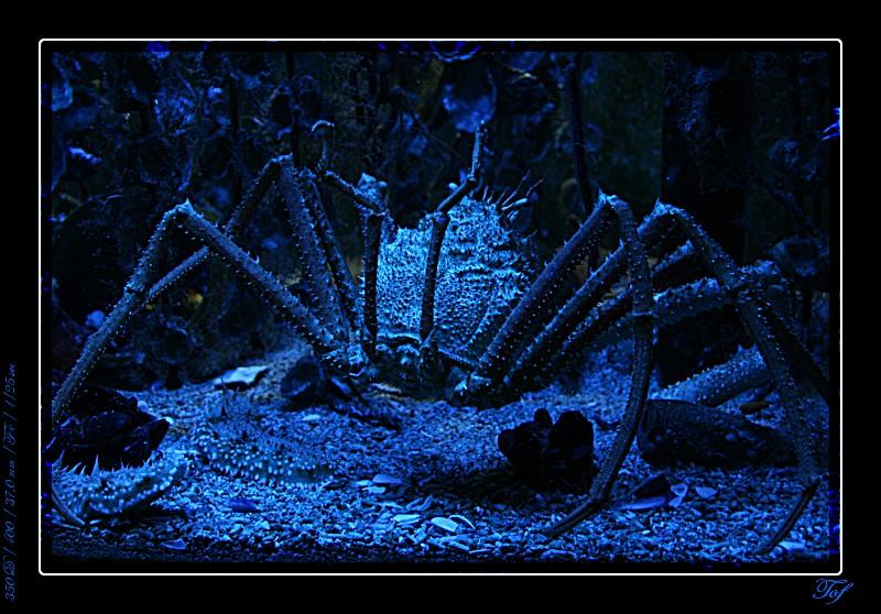 Aquarium de Monaco, le retour... Fav_2024