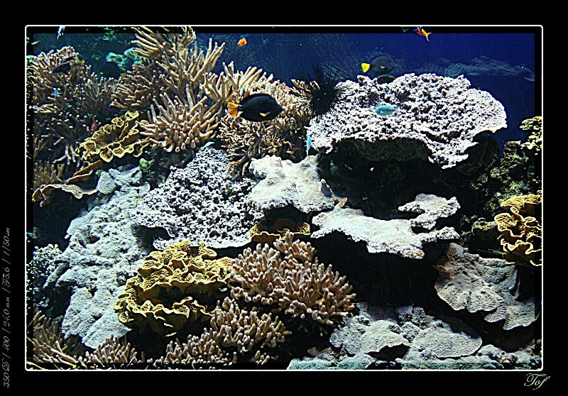 Aquarium de Monaco, le retour... Fav_2026