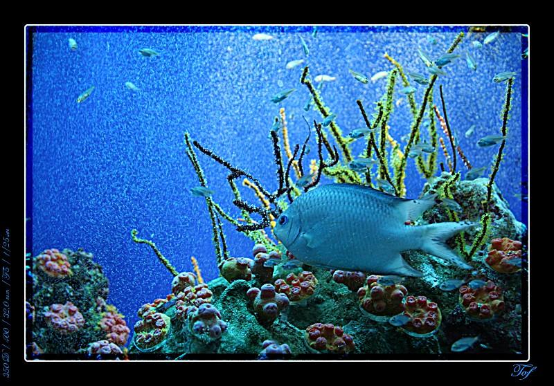 Aquarium de Monaco, le retour... Fav_2028