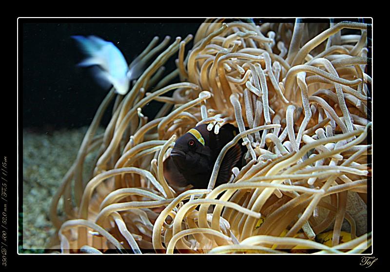 Aquarium de Monaco, le retour... Fav_2029