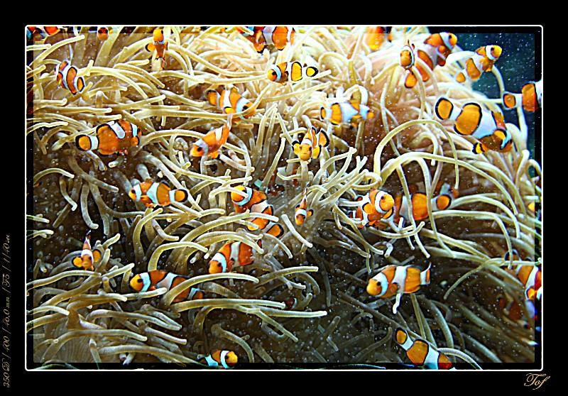 Aquarium de Monaco, le retour... Fav_2030