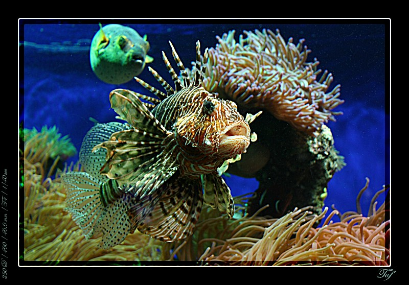 Aquarium de Monaco, le retour... Fav_2031