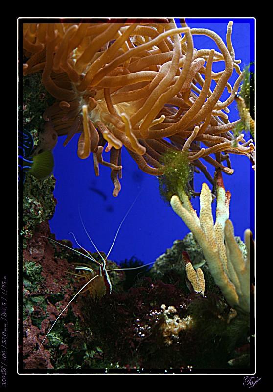 Aquarium de Monaco, le retour... Fav_2033