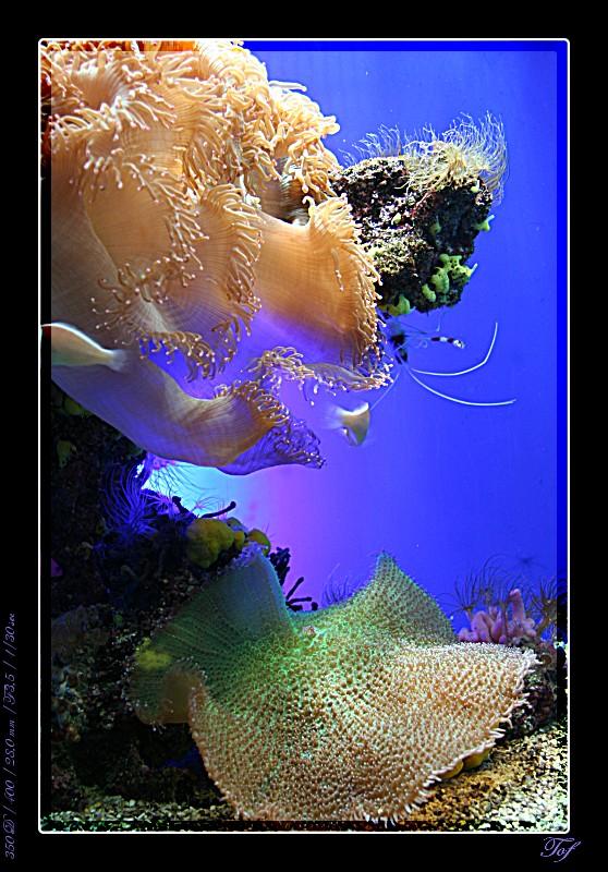 Aquarium de Monaco, le retour... Fav_2034