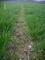 Programme herbicide blé/orge - Page 9 Lpic2520