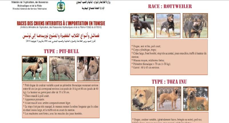 chiens interdits en tunisie Chiens10