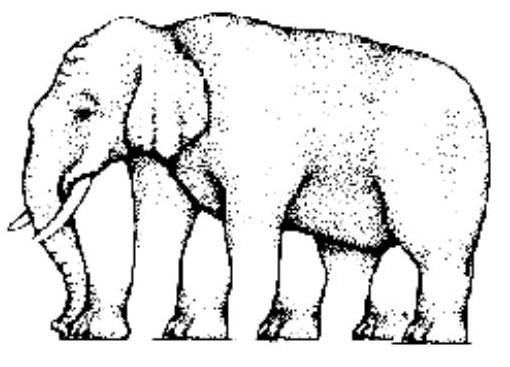 Illusions optical  pic Slon10