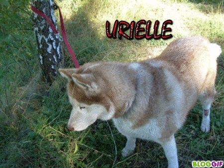 URIELLE, Husky de 7 ans - (15) A_urie10