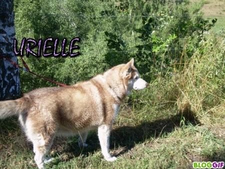URIELLE, Husky de 7 ans - (15) A_urie11