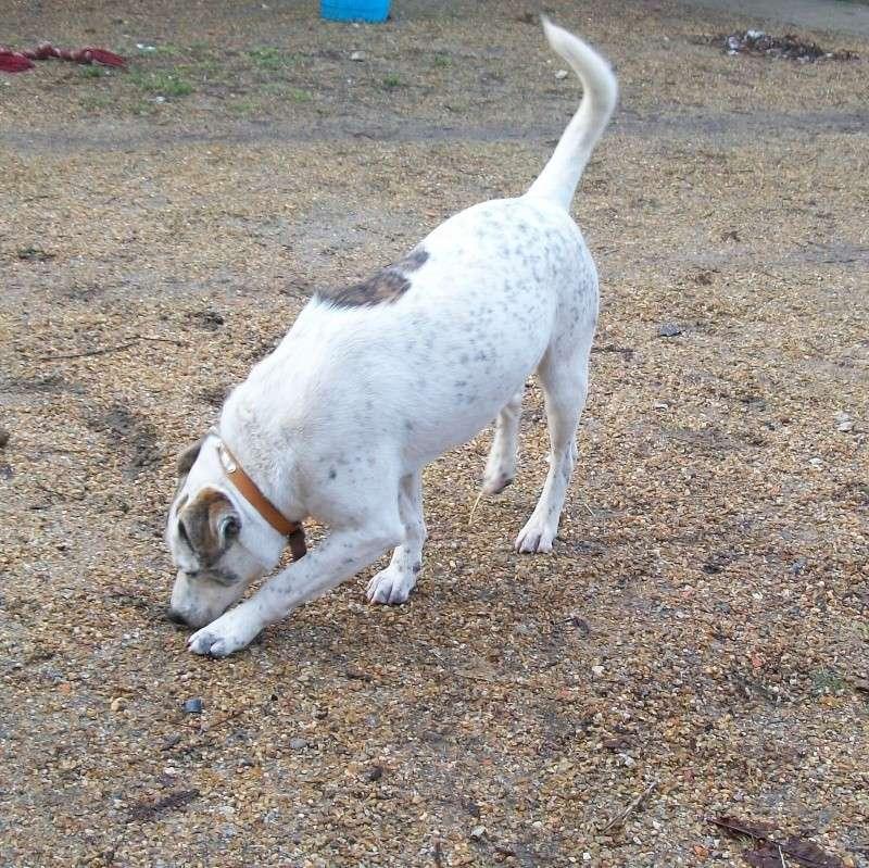 SKYE croisé bull terrier/dogo Mes_to15