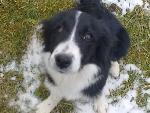 jeune chienne trouvée 25,non identifiée Photo013