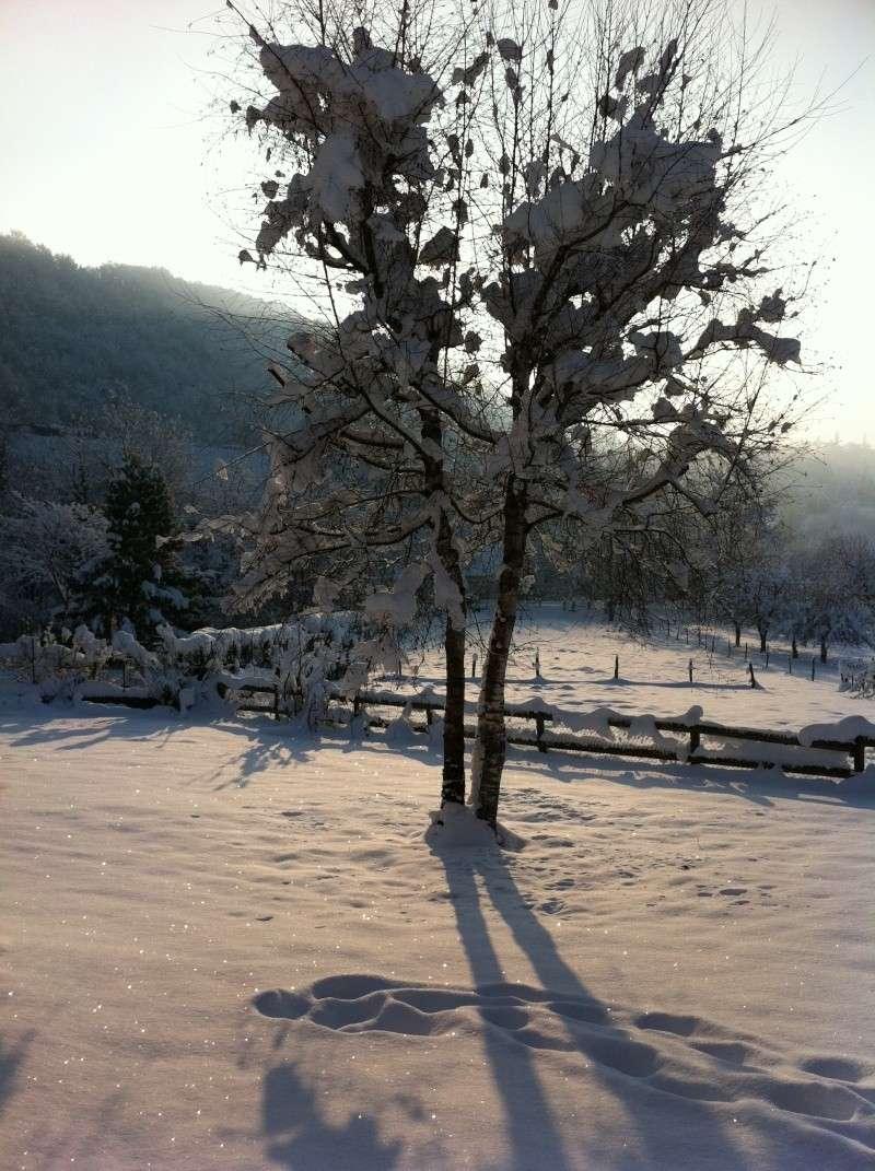 Vos photos sous la neige !!! D_00810