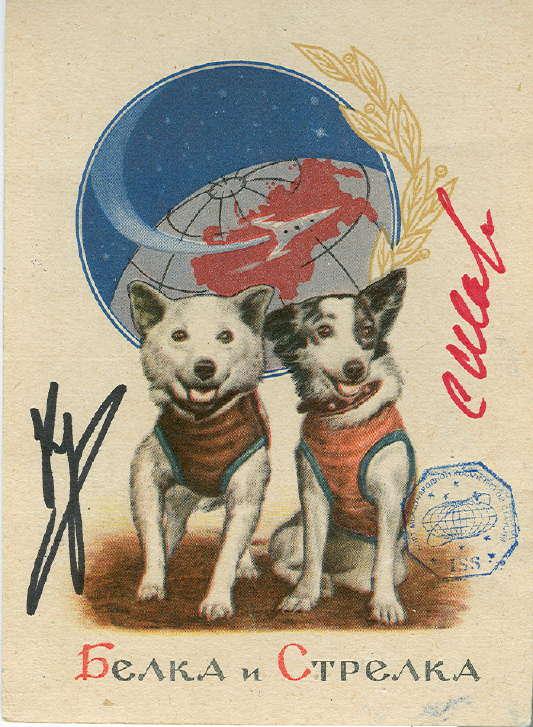 Il y a cinquante ans : Les chiens Belka et Strelka Belka_10