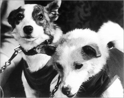 Il y a cinquante ans : Les chiens Belka et Strelka Belka_11