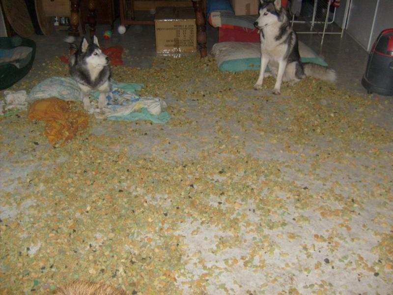 Bétises au jour le jour de nos chiens :-( - Page 5 Pyram_13