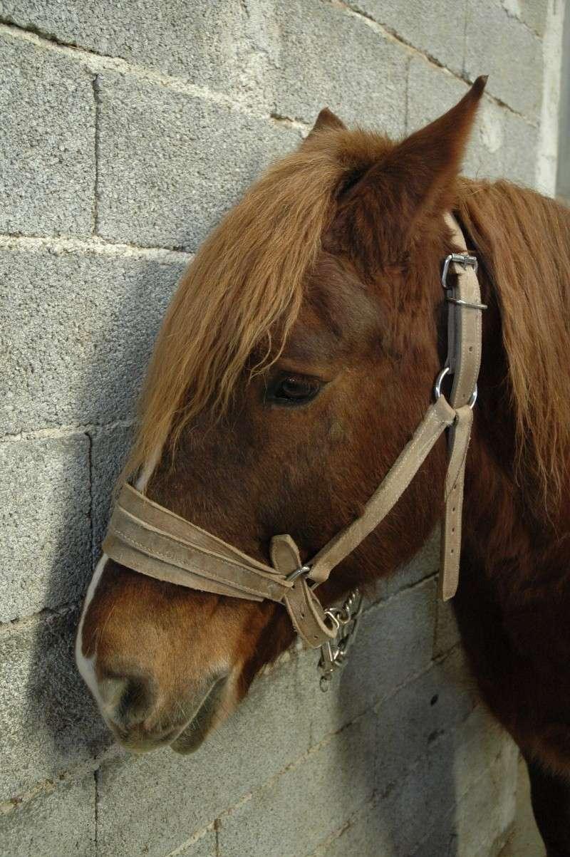 photos chevaux - Page 2 Dsc_0017