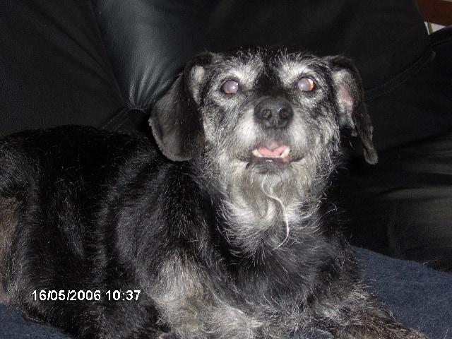 Pet page Charli10