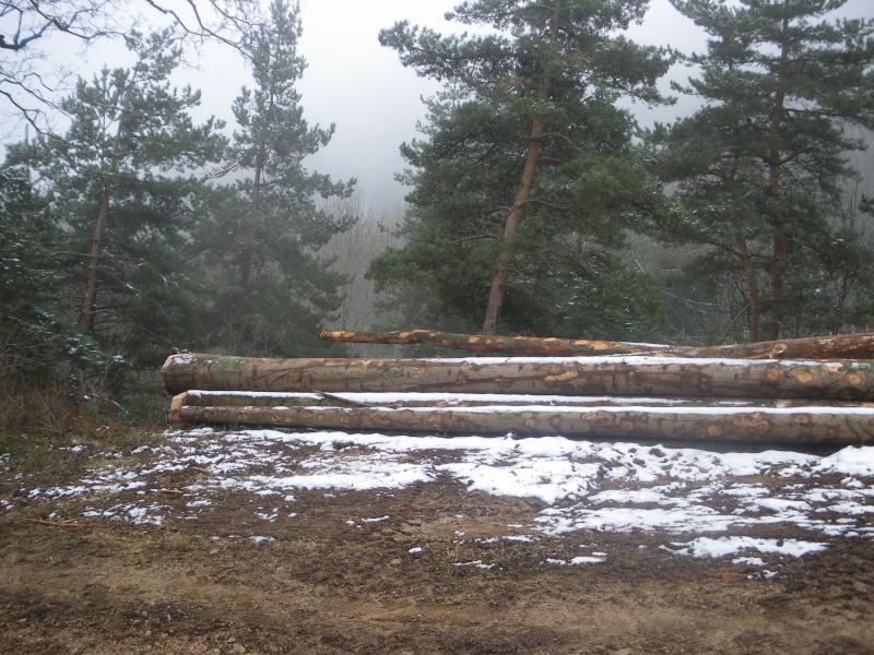 forestiers de roger : première partie - Page 38 Mp_nav60